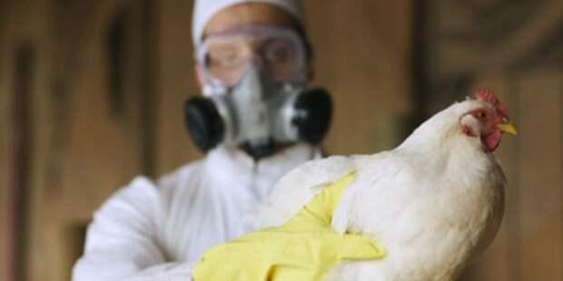«Вектор» готов разработать вакцину от птичьего гриппа
