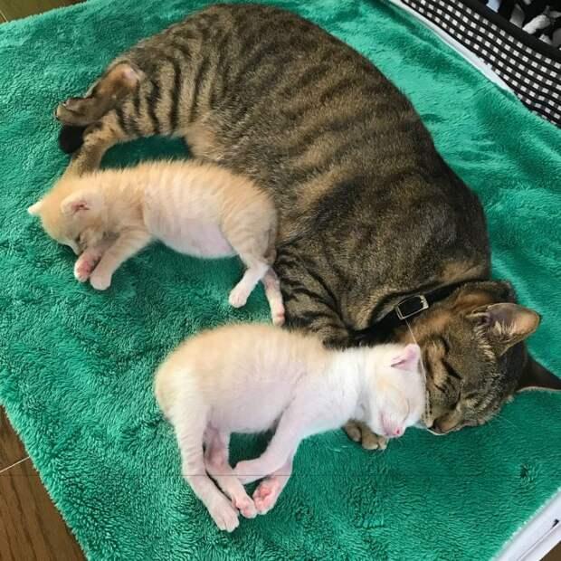 «Они были там, откуда не возвращаются…» Ради спасения двух малышей полосатый кот стал кошкой!