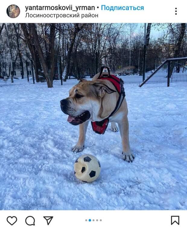Фото дня: четвероногий футболист из Лосинки тренировался на морозе