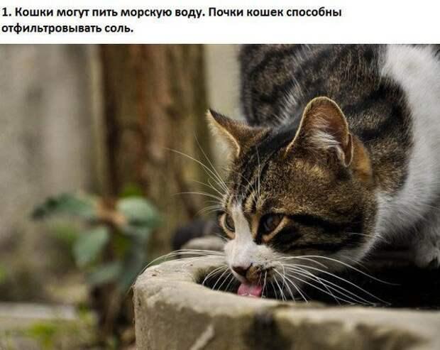 Факты о кошках животные, коты, кошки