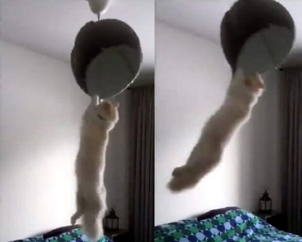 «Одна дома»: что делают кошки, пока хозяев нет