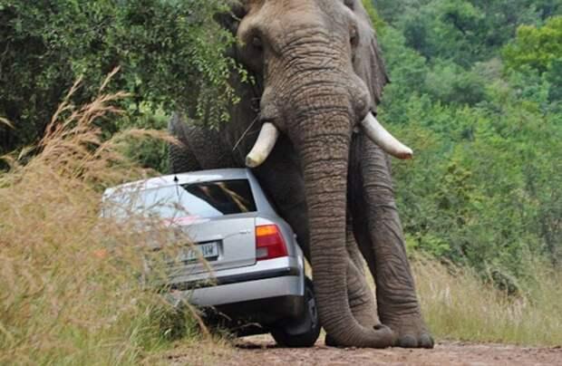 Видео: Почему лучше не злить слонов