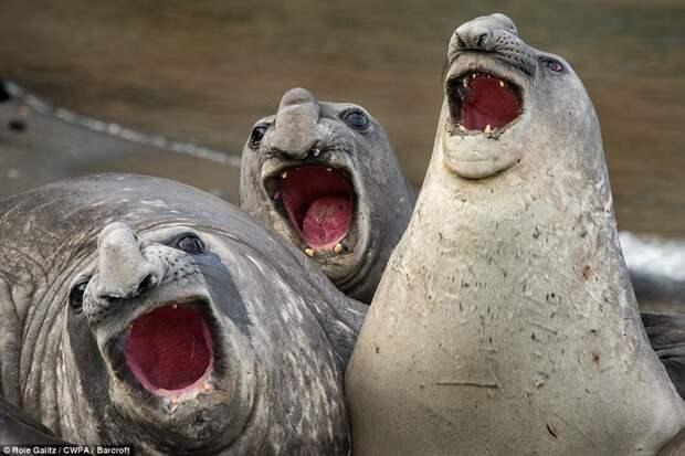 Самые смешные фотографии животных на конкурсе Comedy Wildlife Photography Awards 2017