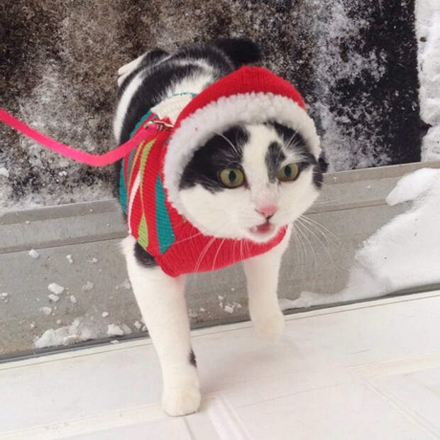 Как домашние кошки впервые реагируют на снег