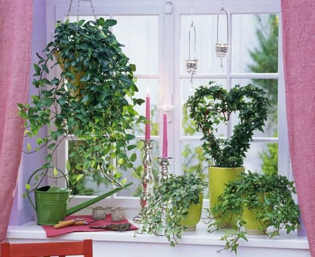 10 самых популярных комнатных вьющихся растений
