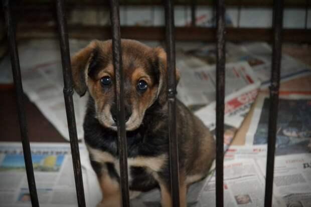 Волонтеры умоляли женщину не оставлять у приюта маленьких щенков, но она была непреклонна история, приют, собака, собаки, щенки