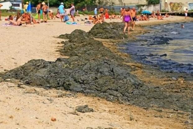 В украинском море «побрезгуют купаться даже свиньи» (ВИДЕО)