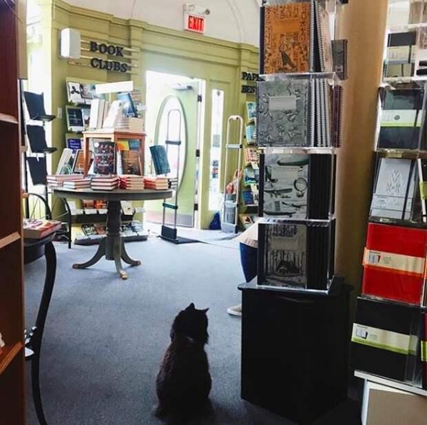 Потерявшийся котенок зашел в книжный магазин и вот уже 11 лет живет в нем