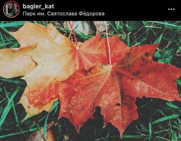 Фото дня: осенние листья в парке Федорова