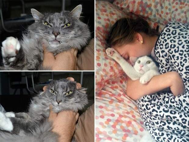От гнева до смирения и принятия 15 котов которые терпеть не могут целоваться обниматься, без кота и жизнь не та, коты и кошки, приколы, приколы с котами, смешные коты и кошки, юмор