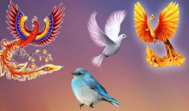 Выберите птичку и определите свой подарок судьбы