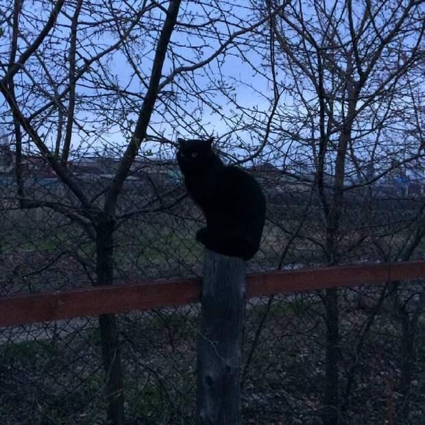 Прикинулся совой город, домашние животные, забор, кот, кошка, село, улица, эстетика