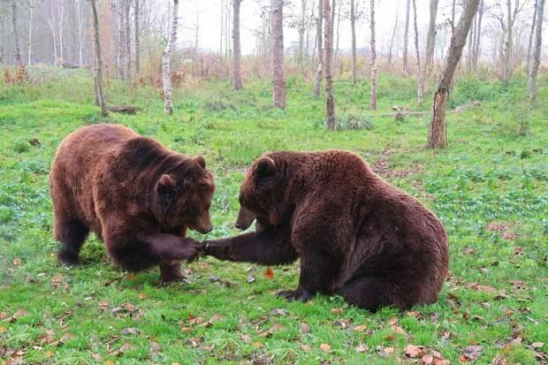 В Сочи 11-летний мальчик приблизился к вольеру с медведями и погиб