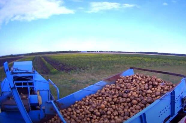 Китайский чеснок и польский картофель: реалии «аграрной сверхдержавы»