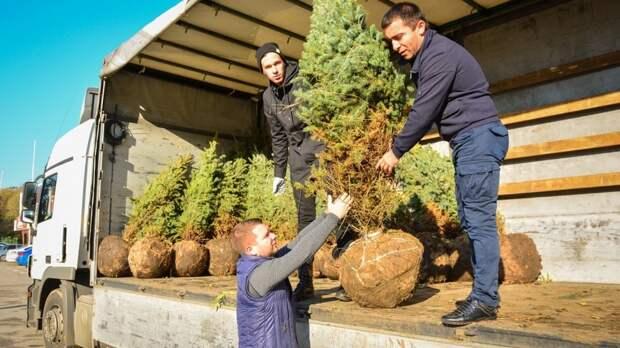 Больше 3тыс деревьев планирую посадить вРостове