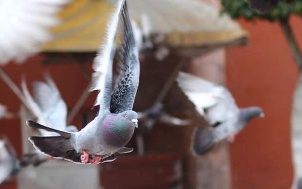 Птичку жалко: голубь попался на превышении скорости