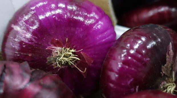 Крымские фермеры планируют собрать в этом году более 500 тонн ялтинского лука