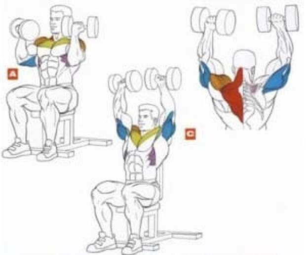 Правильная техника выполнения упражнения.