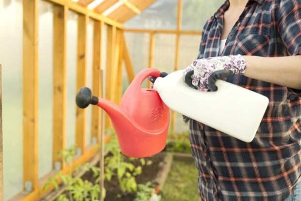 полив томатов по Лунному календарю 2019