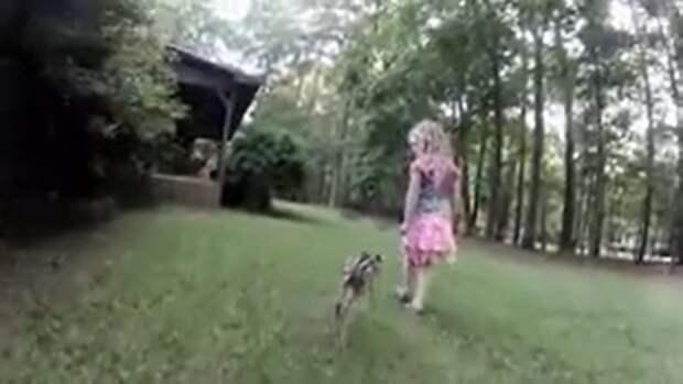 Крошечный олененок подошел к девочке, моля о помощи. Девочка не бросила животное