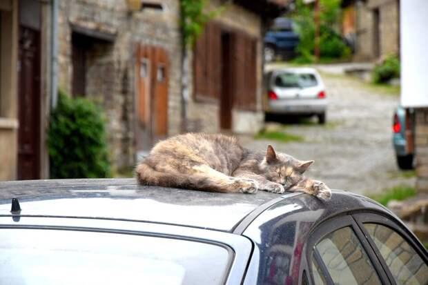 Водитель забыл закрыть окно в машине и ушёл по своим делам. Испугался кражи, вернулся — но вместо пропажи обнаружил «пополнение»