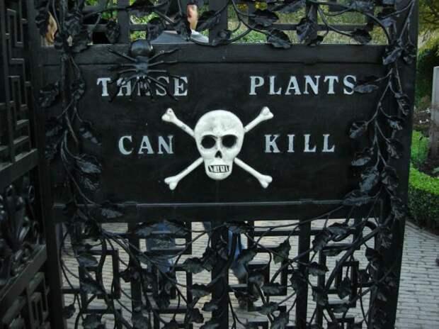 10 самых ядовитых растений нашей планеты, некоторые из которых могут убить вас, даже если вы просто пройдёте мимо
