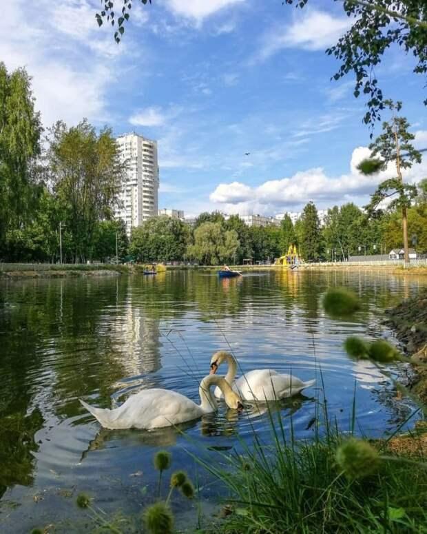 В Лианозовском парке категорически запретили кормить водоплавающих птиц хлебом