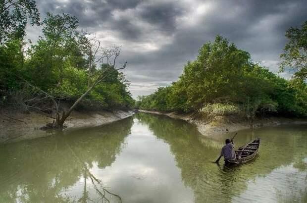 Сундарбан — самый большой вечнозелёный лиственный лес планеты Земля (11 фото)
