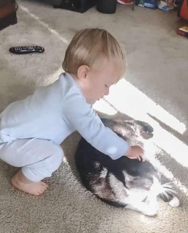 Кошка обожает ребёнка, а однажды ночью прокралась к нему в спальню, чтобы «поговорить» по душам