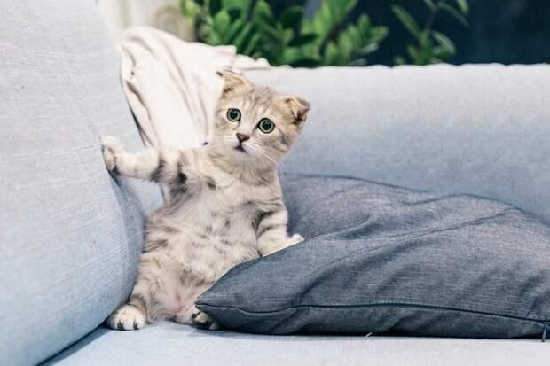 «Орет, но жаждет жить»: в Ленобласти из унитаза вылез живой котенок