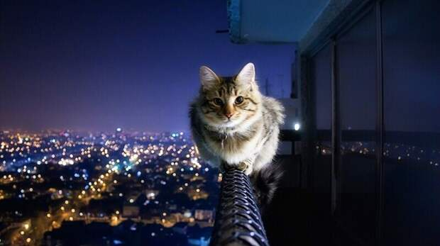 Люди и кошки с поистине стальными нервами