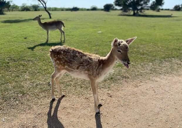 22 милых детеныша диких животных, которых так ихочется потискать