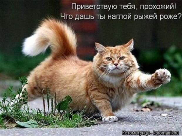 котомашки