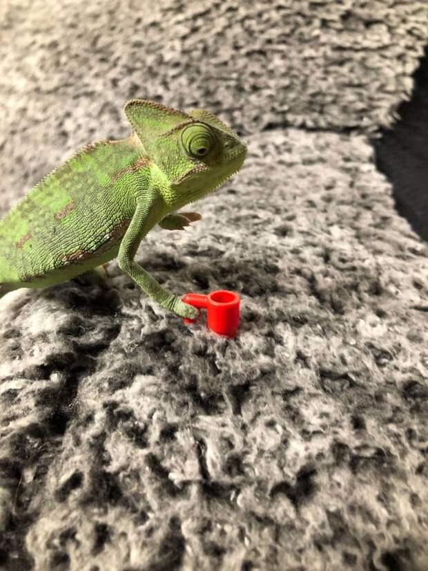 6 забавных фото, на которых хамелеону идеально подходят фигурки из Лего