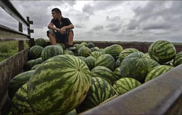 Эксперты Роскачества рассказали, где покупать арбузы без нитратов