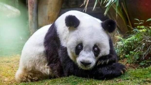 Открытие модельной библиотеки в Сарапуле, извержение вулкана на Камчатке и смерть старейшей в мире панды: что произошло минувшей ночью