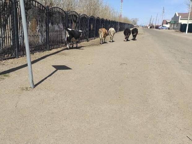 Назван самый проблемный населённый пункт в Забайкалье