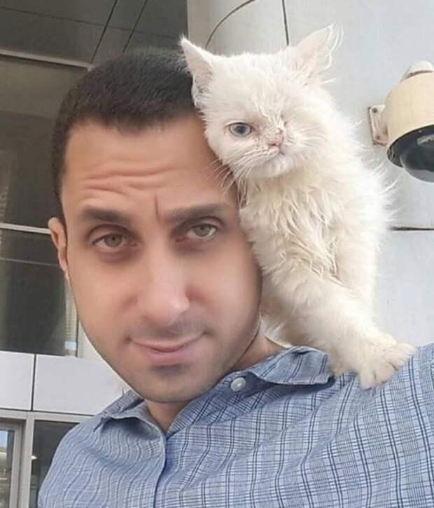 Одноглазый бродячий котенок с улицы Каира получил шанс на лучшую жизнь в США