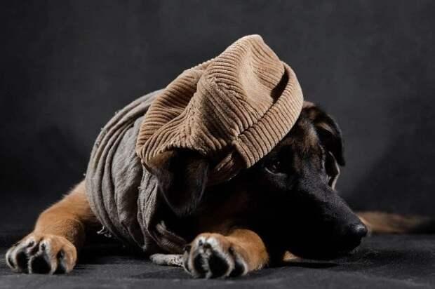Бездомный пес нарядился, чтобы найти новых хозяев в Нижнем Новгороде