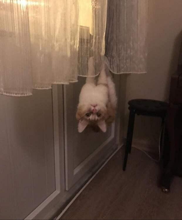 Доказательства, что кошки первыми на Земле освоили антигравитацию