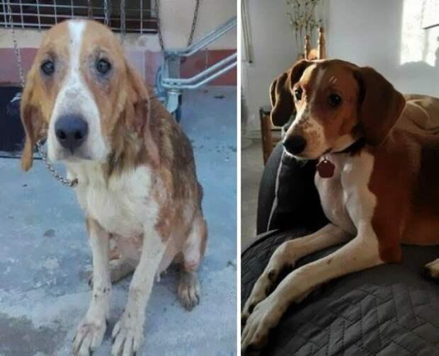 10фото доипосле того, как собаки нашли новых хозяев