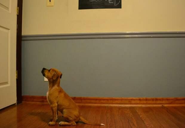 Домашние питомцы ждут хозяев с работы животные, ожидание, хозяин