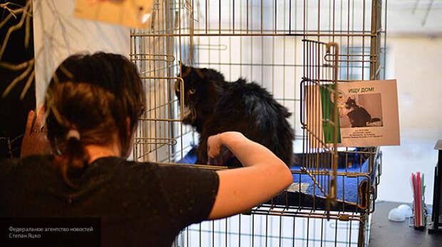 черный кот в клетке