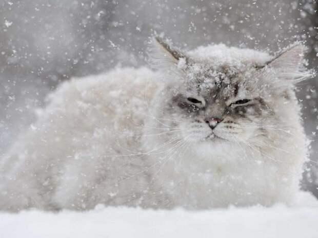 Идет нескончаемый снег...