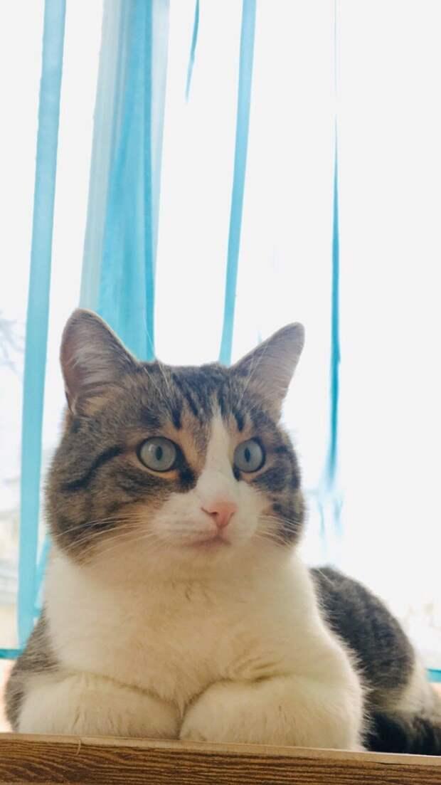 Котенок нагло запрыгнул в машину к девушке и добился того, что она забрала его домой