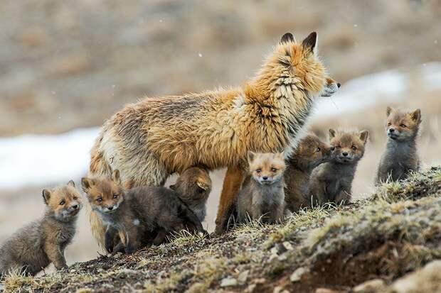 12 фото дикой природы, где видно характер животного