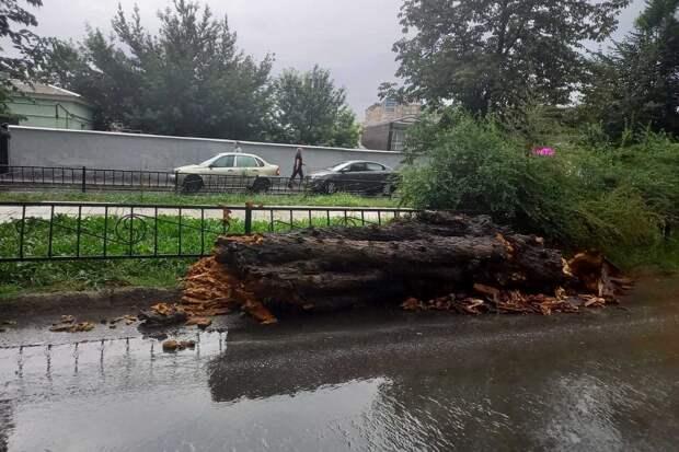 В Симферополе на дорогу рухнуло дерево
