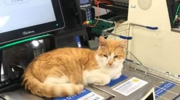 Коту запретили появляться в магазине, но он проигнорировал все запреты и явился в торговый зал