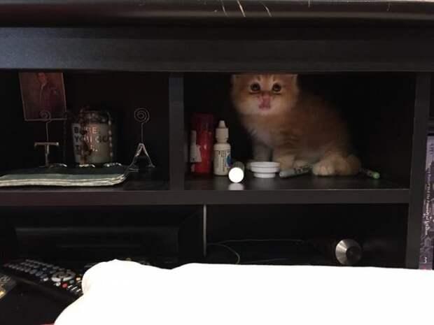 Котёнок потерял свой единственный дом. И сейчас он каждый день показывает, как счастлив снова быть в семье