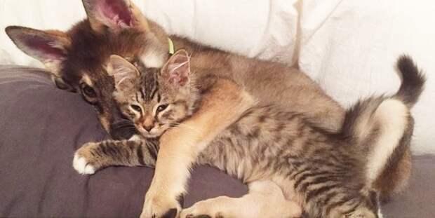Хозяйка решила взять котенка из приюта, но выбор оставила за своим псом